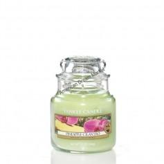 Petite jarre pineapple cilantro