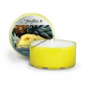 GC fireflies exhilarating pineapple